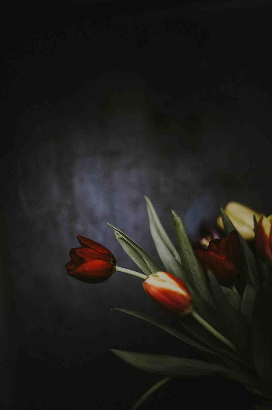Comment faire un bouquet garni