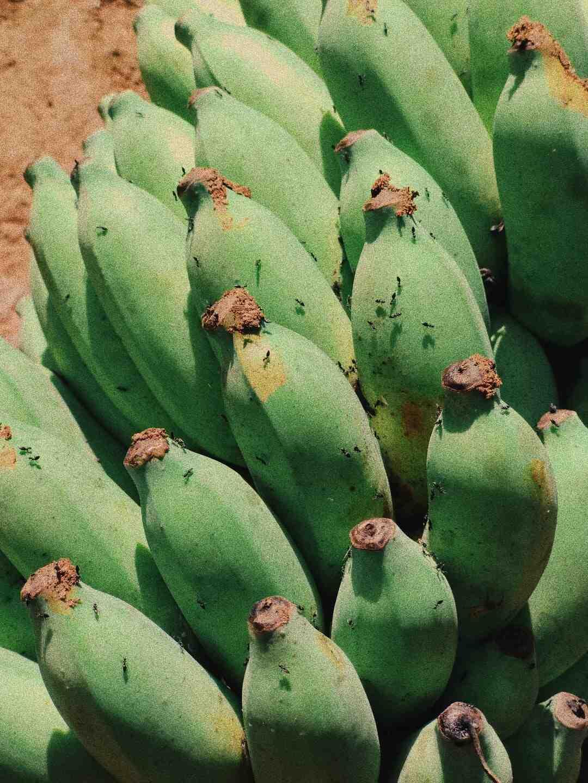 Comment se mange une banane verte ?