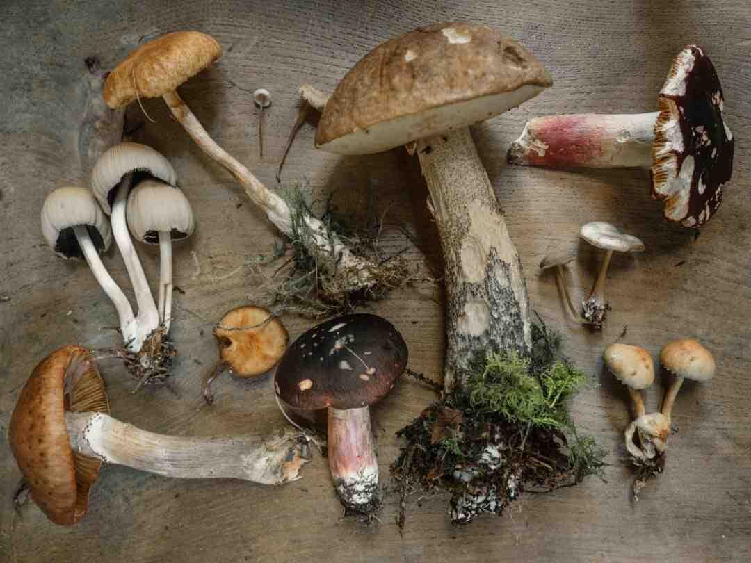 Comment nettoyer et conserver les champignons ?