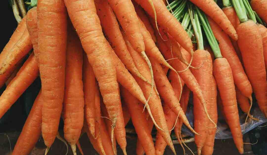 Comment faire bouillir des carottes
