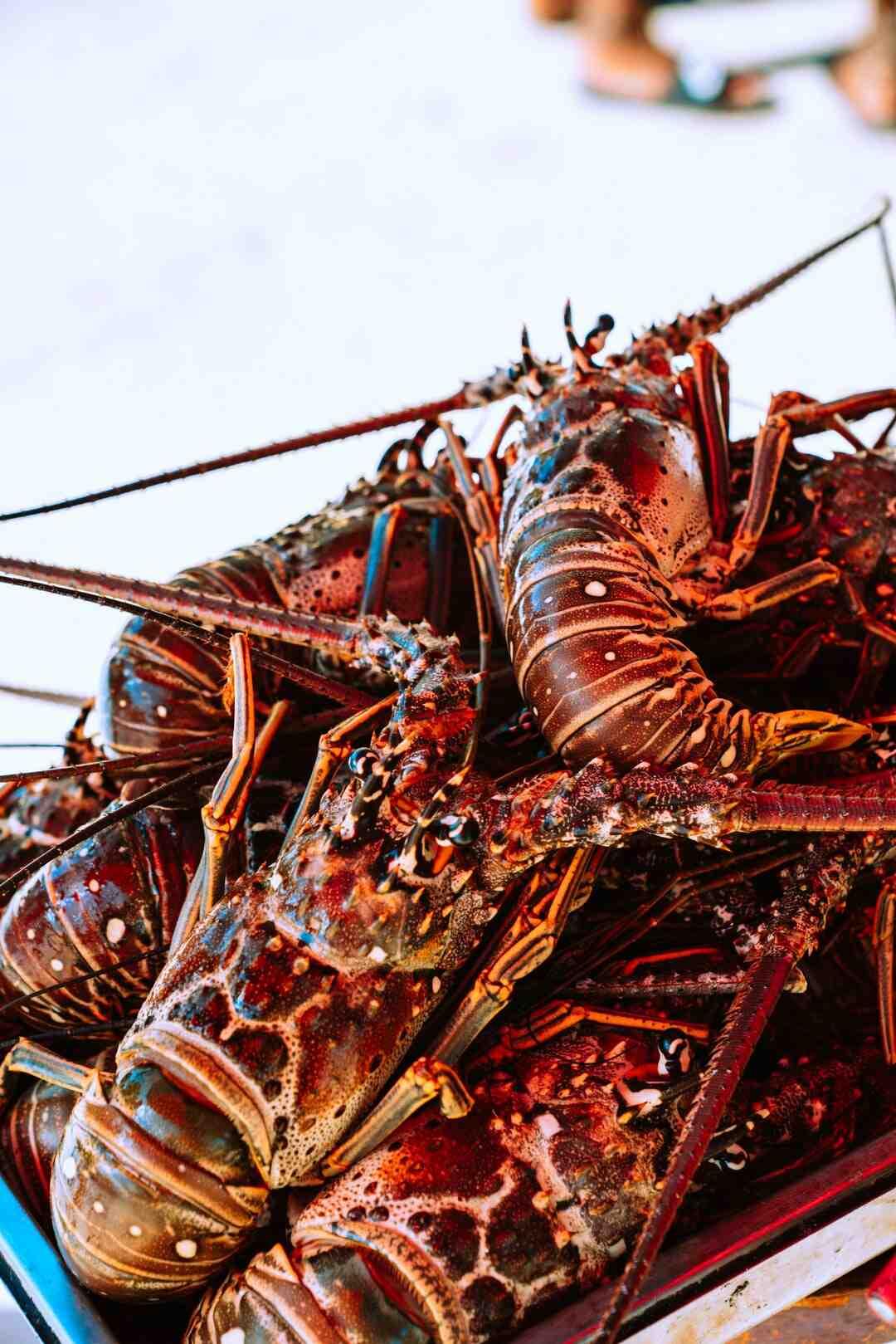 Comment faire cuire les homards sans les faire souffrir ?