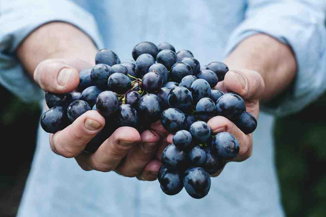 Comment laver du raisin